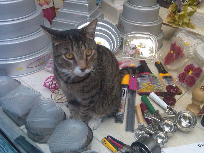 Cat in Cake Window