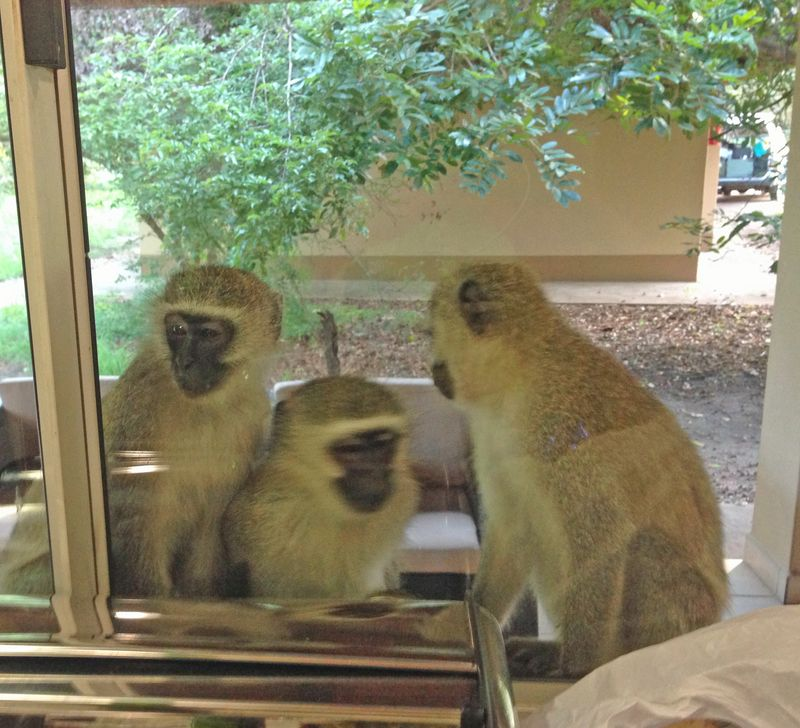 3 monkeys in window